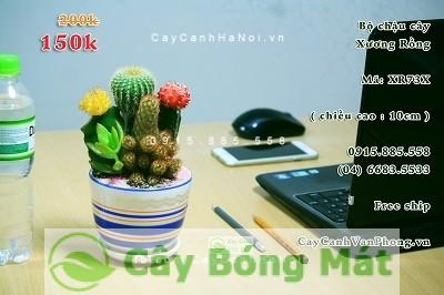 cay-chiu-nang