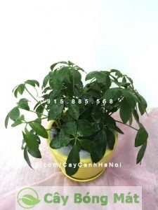 cay-chiu-nang-1-300x200 Một số cây chịu nắng tốt và có lợi trong phong thuỷ