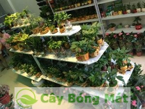cay-hop-tuoi-1-300x225 Nhận lợi ích lớn từ việc làm nhỏ là trồng cây hợp tuổi
