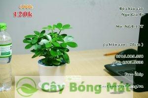cay-phong-thuy-1-225x300 Các loại cây phong thủy thích hợp trồng trong nhà để đón tài lộc đến