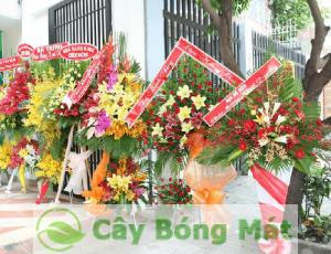 cay-qua-tang-hop-tuoi-1-300x230 Cây quà tặng khai trương mang ý nghĩa sâu sắc