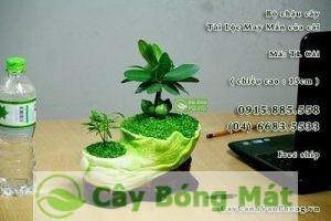 cay-tai-loc-1-300x200 Cây Tài Lộc