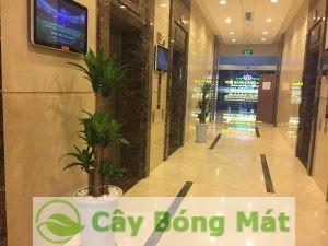 cay-thiet-moc-lan-1-300x225 Cây Thiết Mộc Lan