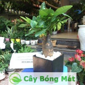 cay-van-phong-5-300x300 Đừng nhận mình là người yêu phong thuỷ nếu nơi làm việc thiếu các cây dành cho văn phòng này!