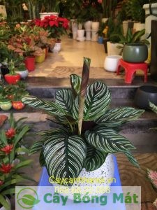 cho-thue-cay-canh-1-300x225 Dịch vụ cho thuê cây cảnh cực hot tại Hà Thành