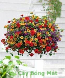 hoa-ban-cong-2-225x300 Nên chọn hoa ban công nào để làm ban công thêm rực rỡ